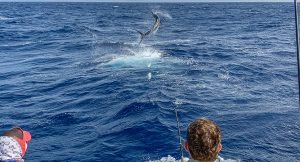 blue marlin fishing gallery 2020